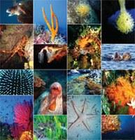 L'effetto degli inquinanti nel Santuario dei Cetacei