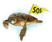 Guida per pescatori: la gestione delle tartarughe marine